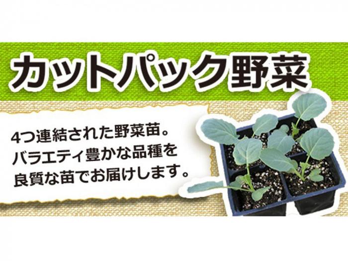 カットパック野菜